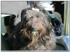 MS-Rigoletto-Hundekreuzfahrt_20101010061350_0006