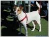 MS-Rigoletto-Hundekreuzfahrt_20101010061442_0007