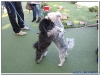 MS-Rigoletto-Hundekreuzfahrt_20101010065044_0026