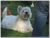 MS-Rigoletto-Hundekreuzfahrt_20101010065624_0033
