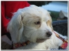 MS-Rigoletto-Hundekreuzfahrt_20101010065934_0038