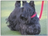 MS-Rigoletto-Hundekreuzfahrt_20101010070315_0043