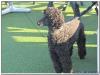 MS-Rigoletto-Hundekreuzfahrt_20101010093602_0088