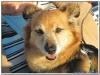 MS-Rigoletto-Hundekreuzfahrt_20101010094038_0093