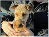 MS-Rigoletto-Hundekreuzfahrt_20101010094107_0094