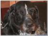MS-Rigoletto-Hundekreuzfahrt_20101010102851_0110
