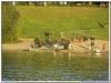 MS-Rigoletto-Hundekreuzfahrt_20101010103544_0112