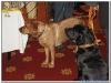 MS-Rigoletto-Hundekreuzfahrt_20101010132910_0139