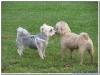 MS-Rigoletto-Hundekreuzfahrt_20101011014601_0188