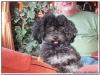 MS-Rigoletto-Hundekreuzfahrt_20101012090528_0390