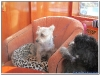 MS-Rigoletto-Hundekreuzfahrt_20101012091002_0394