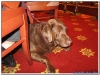 MS-Rigoletto-Hundekreuzfahrt_20101013140301_0542