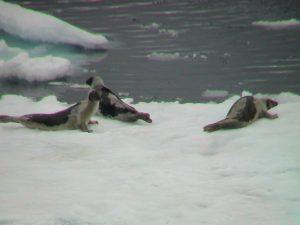 2005-06 Spitzbergen1 222