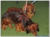 MS-Rigoletto-Hundekreuzfahrt_20101013005701_0418